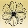 COLLECTION - Histoire de Fleurs - Anémone