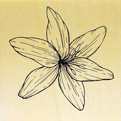 COLLECTION - Histoire de Fleurs - Lys